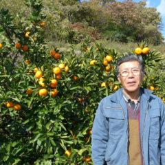 広島県産レモン100%サワー